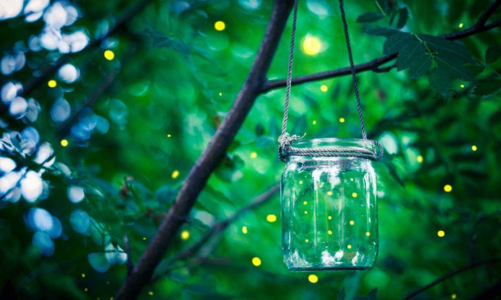Fairy Firefly Photo Background